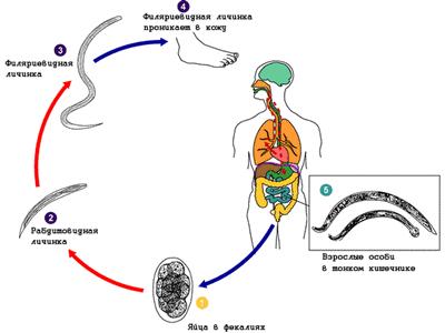 аппаратное очищение кишечника в екатеринбурге