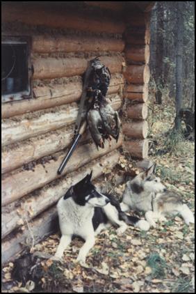 Охота на боровую дичь с лайкой.